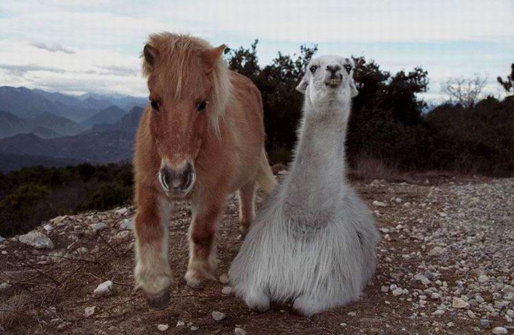 [6ème édition] Personnage le plus Badass Lama+poney